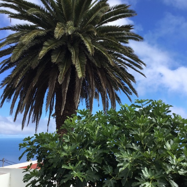 Perales palmera